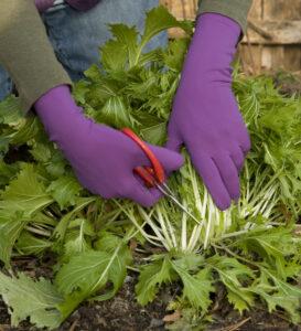 Foxgloves Elle Grip Garden Gloves