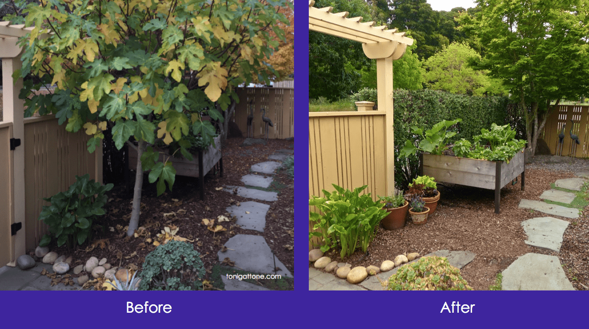 Fig Tree Before After