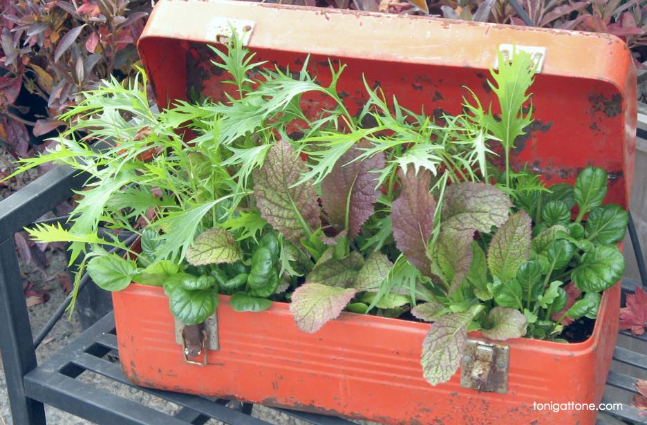 Lettuce Toolbox