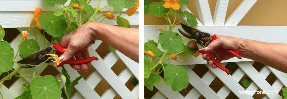 Neutral Wrist Using Garden Tools