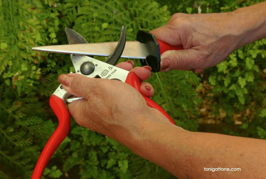 Toni's Tool Tips Sharpener